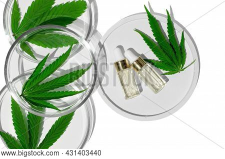 Hemp Oil On A White Podium And Hemp Leaves In Petri Dishes On A White Background. Natural Medicine,