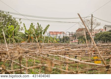 A Bamboo Truss For Growing Gourds And Melons