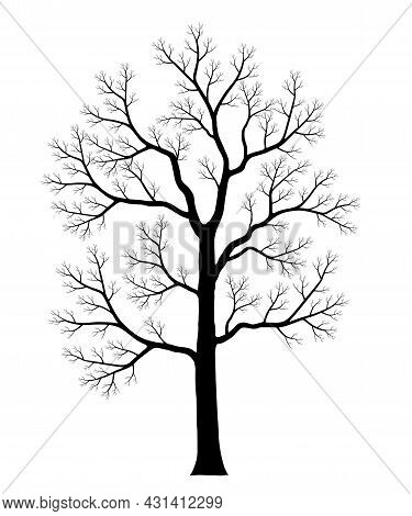 Naked Tree. Silhouette Of Dead Trees Isolated On White Background. Black And White. Vector Illustrat