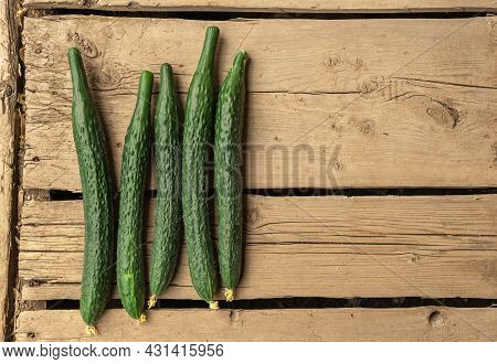 Mature Cucumbers Are Lying On A Wooden Table. Summer Harvest Of Cucumbers From The Garden. Vegetable