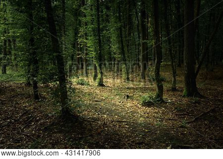 A Dark And Gloomy Forest With Green Leaves, Summer View