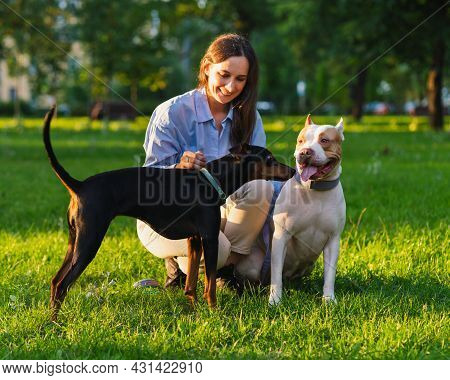 Horizontal Of Brunette Woman Petting American Pitbull Terrier Puppy On Grass In Park At Sunset. Gett