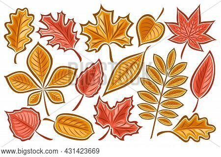 Vector Set Of Autumn Leaves, Lot Collection Of Cut Out Illustrations Autumnal Dried Leaf For Herbari