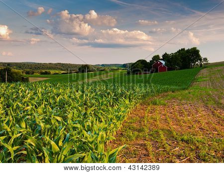 Cornfield and farm in Southern York County, Pennsylvania
