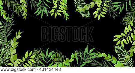 Leaf Palm Tree On Black Background. Tropical Tree Leaves Frame. Jewish Torah Lulav Date Palm. Tradit