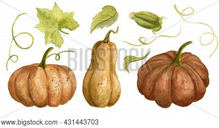 Watercolor Set With Orange Pumpkins And Green Leaves. Drawing Of Autumn Gourds For Harvest Festival.