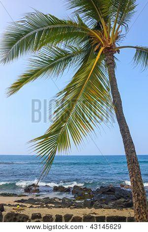 Coast Of Kailua-kona With Palm, Big Island, Hawaii