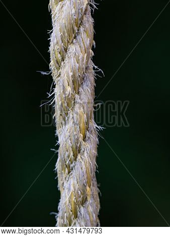 Rough Cord Made From Natural Plant Fiber. Rope Detail On Blurry Background, Closeup.