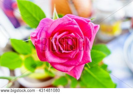 Top View Of A Home Grown Rose Flower. A Blurred Flower Pot And Table Are Visible In The Background