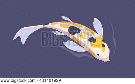 Japanese Koi Fish Swimming In Asian Garden Pond. Chinese Decorative Spotty Carp In Water. Top View O