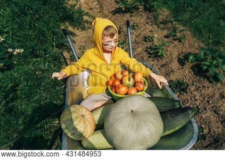 Cute Boy Sitting In Wheelbarrow With Harvest.