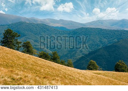 Beech Trees On The Hill. Empty Alpine Meadow With Dry Yellow Grass. Sunny Weather With Blue Sky. Cou