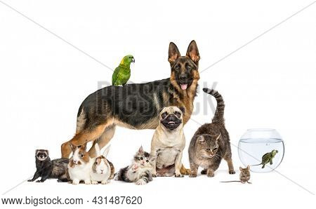Group of pets in a row, Dogs, cats, ferret, rabbit, birds, mouse, isolated on white