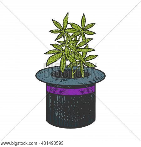 Hemp Cannabis Plant In Top Hat Cylinder Color Sketch Engraving Vector Illustration. T-shirt Apparel