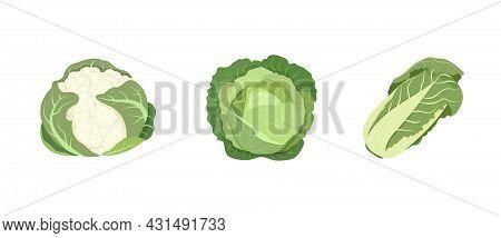 White Cabbage, Peking Cabbage, Cauliflower Isolated On White Background