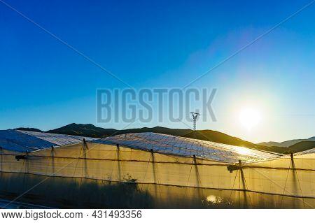 Spanish Landscape In Almeria Region. Many Plastic Greenhouses On Coast, Andalusia.