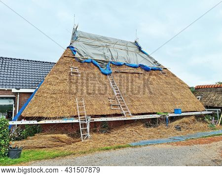 Making a new straw roof on a traditional farm house in the countryside from the Netherlands