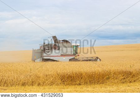 Combine Harvests Golden Ripe Wheat On A Field At The End Of Summer. Concept Of A Rich Harvest. Farmi