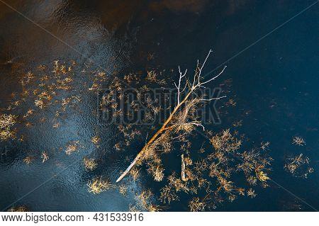 Spring Season. Aerial View Of Fallen Tree In Water. Birds Eye View Of Spring Flood. Flat View Landsc