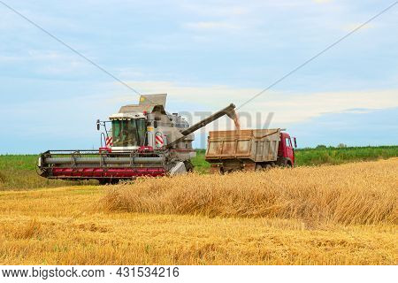 Harvester Combine Harvesting Wheat And Pouring It Into Dump Truck During Wheat Harvest At The End Of