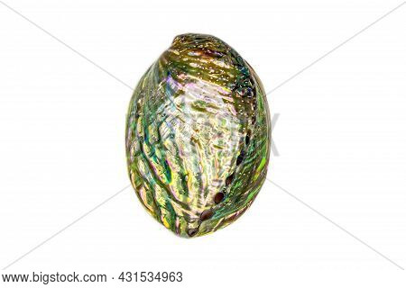 Iris Galiotis, The Common Name For The Black-footed Paua Or Rainbow Abalone, Is A Species Of Edible