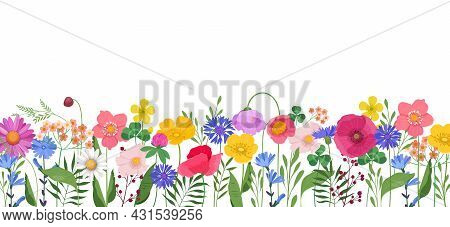 Horizontal Banner With Multicolored Wildflowers And Leaves. Poppies, Buttercups, Cornflowers, Cosmos