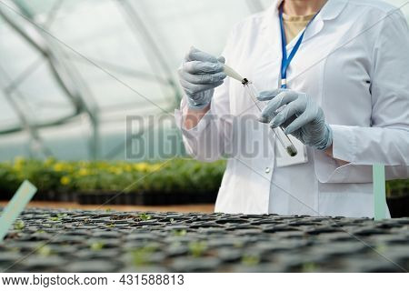 Gloved scientist putting sample of soil into flask over group of small pots with seedlings