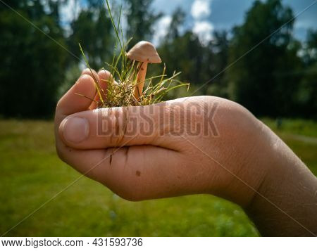 Inedible Mushrooms. A Hand Holds A Mushroom Toadstool In The Palm Of The Hand. Dangerous Mushrooms I