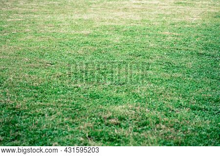 Green Summer Meadow With Reshly Mown Grass