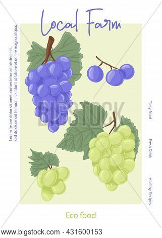 Fresh Grape Juice Packaging Design. Wine Grapes, Table Grapes Vector Hand Drawn Card Concept.