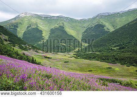 Flowering Meadow, Belianske Tatras Mountain, Slovak Republic. Seasonal Natural Scene.
