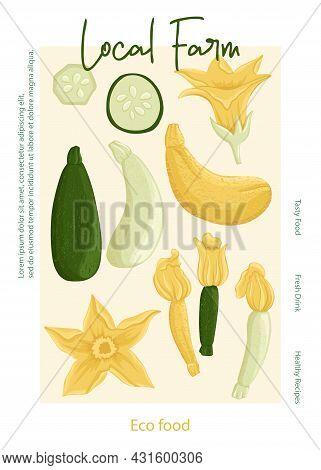 Local Farm Poster Design. Veggie Zucchini Cover Concept. Vector Zucchini Cartoon Illustration.