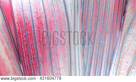 Colored Colorful Background. A Bright Background Mixed With Paints And Reliefs. Texture With A Relie