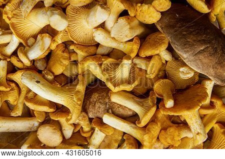 Full Frame Shot Of Fresh Yellow Delicious Wavy Vegetarian Chanterelle And Boletus Mushrooms For Sale