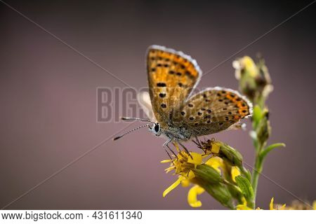Incredibly Beautiful Butterfly On A Yellow Flower Close Up, Incredible Wildlife