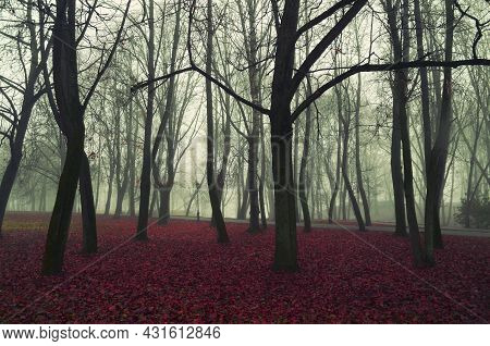 Autumn landscape, autumn park alley in foggy weather, bare autumn trees and dry fallen red autumn leaves, autumn foggy forest, autumn forest landscape, autumn forest trees
