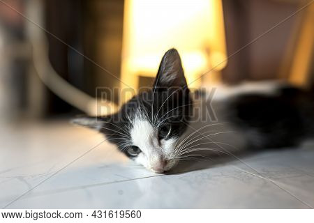 The Sick Cat Lay Weakly On The Floor With Gaze Staring Out Motionless. Cat's Health Concept.