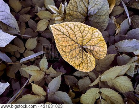 Yellow Leaf On The Background Of Plants.