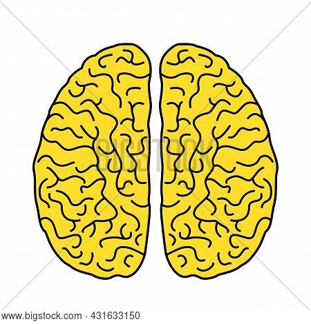 Two Hemispheres Of The Human Brain In A Linear Style. Flat Icon Of The Brain. Vector Illustration Is