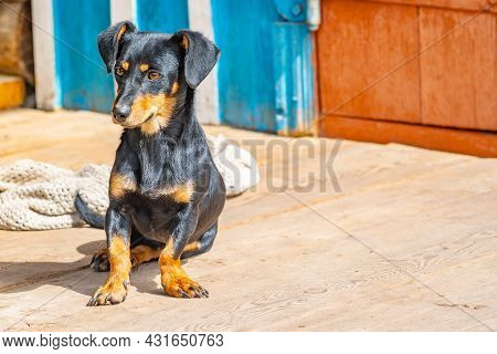 A Small Dog Of The Dachshund Breed Sits At The Threshold Of The Door Of An Old Poor Village House, G