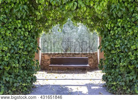 Arch Created By Ivy (hedera Helix, Magnoliophyta, Magnoliopsida) That Behind Is A Wooden Bench Witho