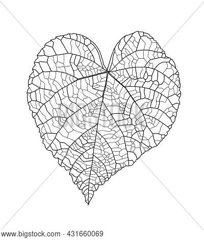 Linear Graphic Picture Linden Leaf With Veins In The Shape Of A Heart Isolated On A White Background