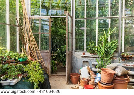 Old Pottery Clay Terracotta Pots For Houseplants Growing Outside Glasshouse With Different Tropical