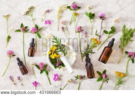 medical flowers herbs essential oils in bottles. alternative medicine. clover milfoil tansy rosebay