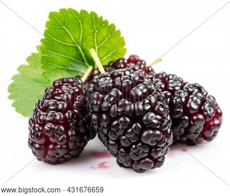 Ripe black mulberries fruits with green leaves isolated on white background.