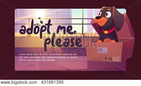 Adopt Me Poster With Cute Dog In Cardboard Box On City Street. Concept Of Adoption Homeless Animals.