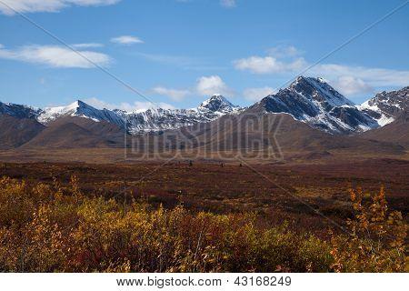 Tundra In Fall
