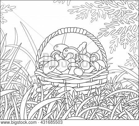 Big Wicker Basket Full Of Picked Mushrooms Among Grass On An Autumn Forest Glade, Black And White Ou