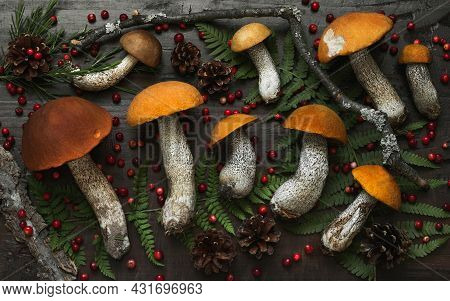 Forest Mushrooms Background. Aspen Mushrooms, Red Berries And Cones On A Dark Wooden Background. Aut