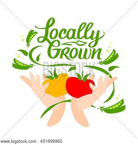 Locally Grown. Vector Logo, Locavore Food. Lettering With Calligraphy With Vegetable. Hands Hold Tom